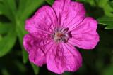 Purple Flower MacroJuly 10, 2009