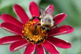 Bee MacroJuly 27, 2009