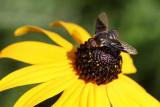 Bee MacroAugust 25, 2009