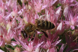 Bumble Bee MacroSeptember 1, 2009