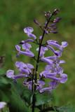 Purple Flower MacroSeptember 7, 2009