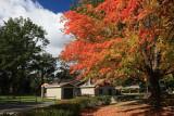 Autumn ColorsOctober 6, 2009