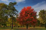 Autumn Scene in HDROctober 16, 2009