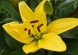 Yellow Flower MacroJune 22, 2010