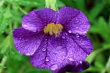 Purple Flower MacroJuly 23, 2010