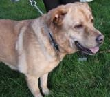Rescue Dog GlindaOctober 18, 2010