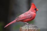 CardinalOctober 21, 2010