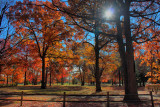 More Autumn Colors in HDR November 2, 2010