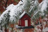 Autumn Snowstorm  November 8, 2010