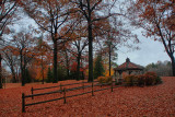 A Million Leaves in HDR November 17, 2010