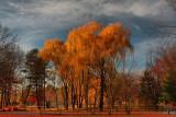 Autumn Landscape in HDR November 21, 2010