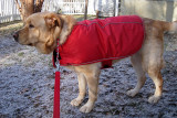 Glinda our Rescue DogDecember 9, 2010