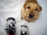 Dog and SnowshoesJanuary 13, 2011