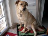 Our Dog GlindaFebruary 10, 2011