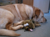 Glinda and Stuffed RoadkillFebruary 11, 2011