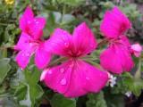 Waterdrops on FlowersSeptember 26, 2012