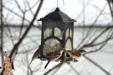Sparrows at birdfeeder
