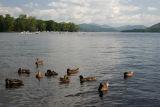 July 30, 2006Ducks at Lake