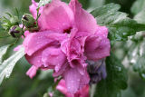 August 1, 2006Water Drops