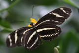 Butterfly - Bronx Zoo
