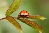LadybugJune 4, 2008