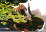 dogfish2