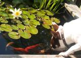 dogfish3