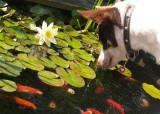 dogfish5