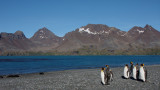 King Penguins and the scenery of Fortuna Bay