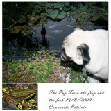 The pug and the frog