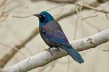 Various Other Birds