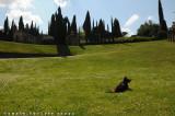 La buzziana, il tempio di Apollo e Guendalina