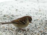 7104.Birdie