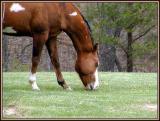 HorseVisit-6846