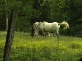 HorsesFeeding-9814
