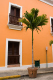 Street Palm
