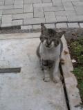Bogor's scruffiest kitty