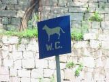 Monte Fort - this is a sign for a patch where you take your dog for WC break