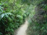Kowloon Hike