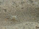 Repulse Bay-Mid-Autumn Festival - sand crab