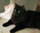 Digtal Art Cats
