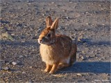 HAPPY EASTER - GOT A CARROT ?
