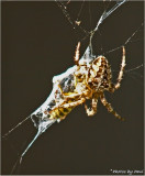 SPIDER 1 . . . .  YELLOW JACKET 0