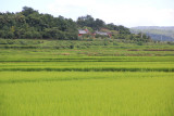 Rice fields along the road