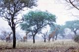 North Cameroon 1974