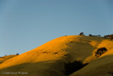 Golden Hillside