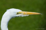 What a beak!