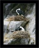 Cormorants' Nests, Bruny NP