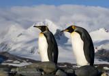 South Georgia and the Falkland Islands