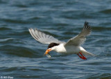 Tern Fishing 1